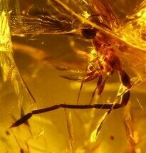 8mm Fossil Damselfly (Zygotera) In Amber - Myanmar For Sale, #107513