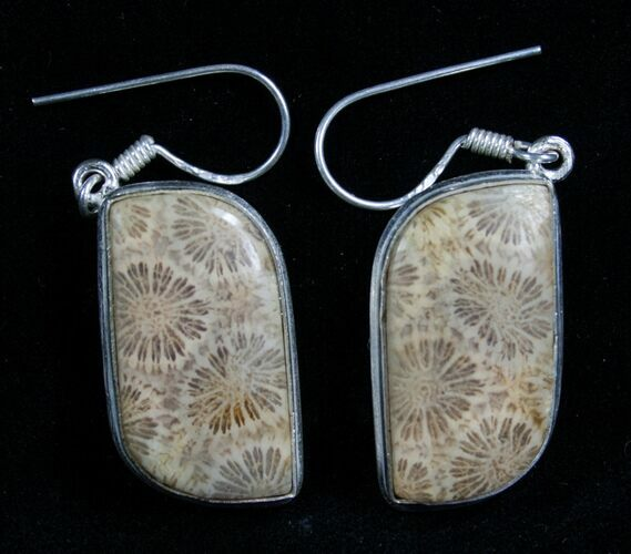 Beautiful Fossil Coral Earrings