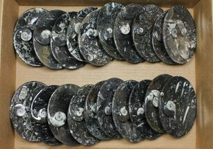 "Wholesale Lot: 4-3/4"" Oval Fossil Stoneware - 20 Pieces For Sale, #108062"