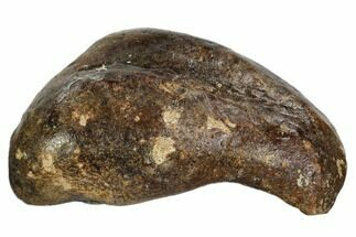 Whale (Unknown Species) - Fossils For Sale - #109266