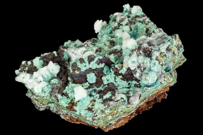 "1.9"" Rosasite, Aurichalcite and Calcite Crystal Association - Utah"