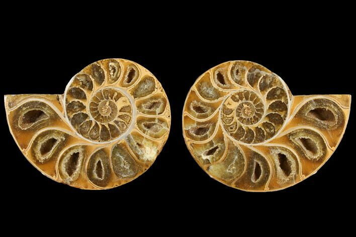 "2.8"" Cut & Polished, Agatized Ammonite Fossil (Pair)- Jurassic"