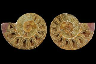 "Buy 3.1"" Cut & Polished, Agatized Ammonite Fossil (Pair)- Jurassic - #110770"