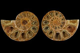 "Buy 3.3"" Cut & Polished, Agatized Ammonite Fossil (Pair)- Jurassic - #110779"