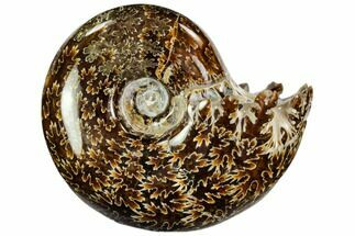 "3.2"" Polished, Agatized Ammonite (Cleoniceras) - Madagascar For Sale, #110525"