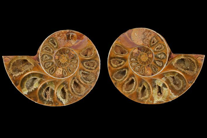 "3.1"" Cut & Polished, Agatized Ammonite Fossil (Pair)- Jurassic"