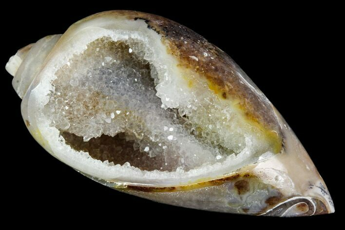 "1.6"" Chalcedony Replaced Gastropod With Druzy Quartz - India"