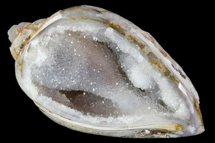"1.81"" Chalcedony Replaced Gastropod With Druzy Quartz - India"