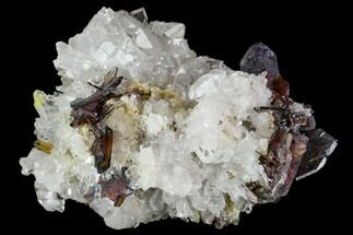 "1.6"" Brookite and Quartz Crystal Association- Pakistan For Sale, #111341"