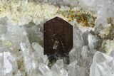 "Beautiful, 3.9"" Brookite and Quartz Crystal Association - Pakistan - #111331-1"