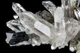 "1.5"" Anatase Crystal and Quartz Association - Norway - #111422-2"