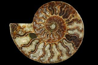 "4.1"" Agatized Ammonite Fossil (Half) - Crystal Chambers For Sale, #111488"
