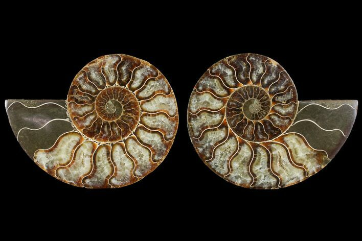 "4.4"" Agatized Ammonite Fossil (Pair) - Madagascar"