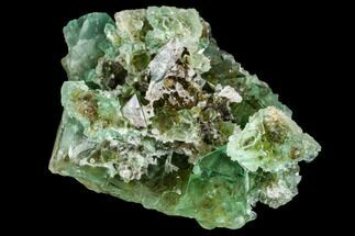 "3.1"" Green Fluorite Crystal Cluster - South Africa For Sale, #111578"