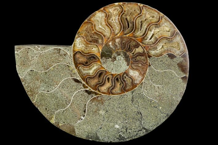 "Bargain, 5.9"" Agatized Ammonite Fossil (Half) - Crystal Chambers"