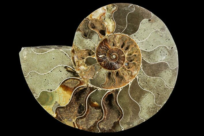 "Bargain, 7.0"" Agatized Ammonite Fossil (Half) - Crystal Chambers"