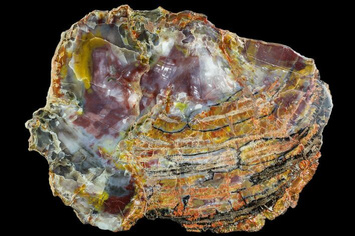 "14.3"" Colorful Petrified Wood (Araucarioxylon) Slab - Arizona"