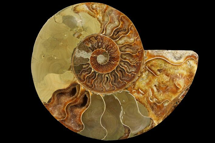 "6.6"" Agatized Ammonite Fossil (Half) - Madagascar"