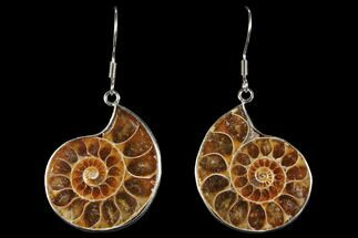 Buy Fossil Ammonite Earrings - 110 Million Years Old - #112219