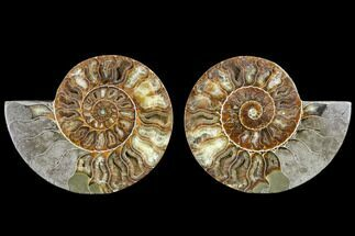 "Buy 5.5"" Agatized Ammonite Fossil (Pair) - Madagascar - #113014"