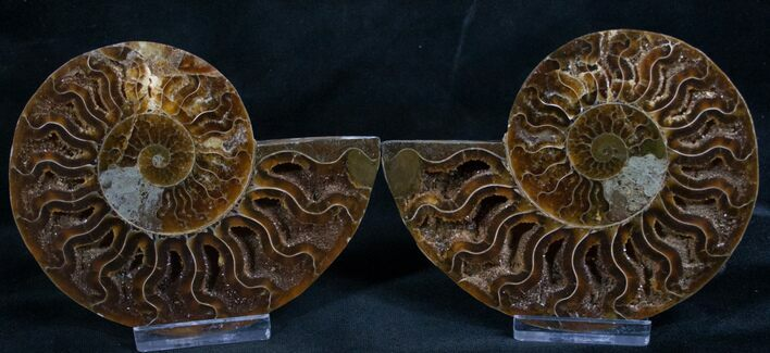 "4.1"" Cut and Polished Ammonite Pair"