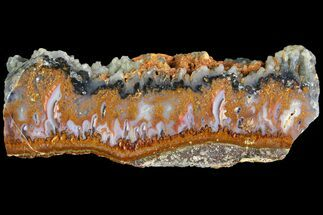 Quartz var. Agate - Fossils For Sale - #114501