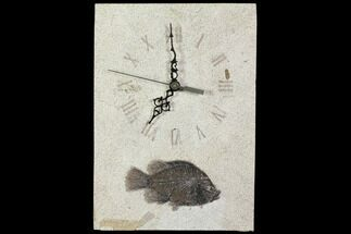 "11.7"" Tall Clock With Cockerellites Fish Fossil - Wyoming For Sale, #114320"