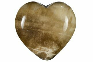 "1.6"" Polished, Triassic Petrified Wood Heart - Madagascar For Sale, #115505"