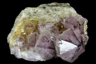 "Buy 3.1"" Wide, Amethyst Crystal Cluster - South Africa - #115381"