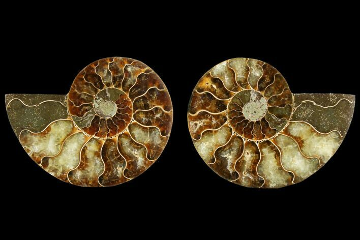 "3.3"" Sliced Ammonite Fossil (Pair) - Agatized"