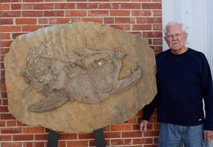 "42"" Fossil Xiphactinus Skull - Terror Of The Inland Seaway! For Sale, #117041"