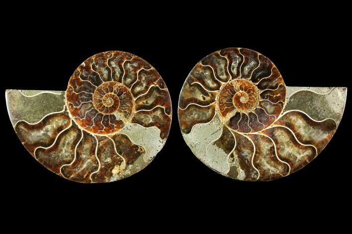 "4.5"" Sliced Ammonite Fossil (Pair) - Agatized"