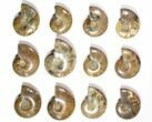 "Wholesale Lot: 2.8 to 4.2"" Polished Ammonite Fossils - 23 Pieces - #116657-1"