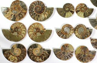 "Buy Wholesale Lot: 4.1 to 5.8"" Cut/Polished Ammonite Fossil - 11 Pairs - #117037"