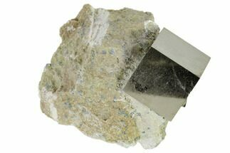 Pyrite - Fossils For Sale - #118239