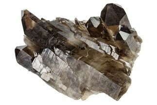 "3.1"" Dark Smoky Quartz Crystal Cluster - Brazil For Sale, #119543"