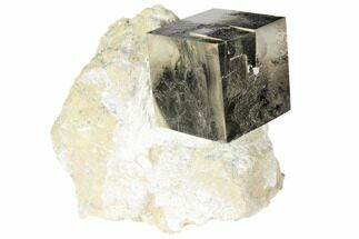 Pyrite - Fossils For Sale - #118260