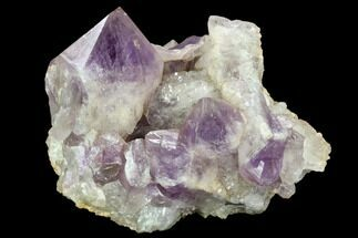 "6.5"" Wide Amethyst Crystal Cluster - Zambia For Sale, #114053"