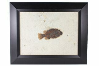 Buy Framed Fossil Fish (Cockerellites) - Green River Formation - #122647