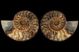 "8.7"" Agatized Ammonite Fossil (Pair) - Madagascar For Sale, #122411"