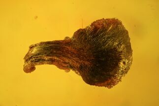 Fossil Leaf, Fly & Springtail In Baltic Amber For Sale, #123419