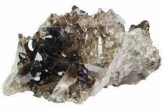 "7.4"" Dark Smoky Quartz Crystal Cluster - Brazil For Sale, #124610"