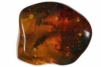 "1.3""  Polished Chiapas Amber (9 grams) - Mexico For Sale, #114875"