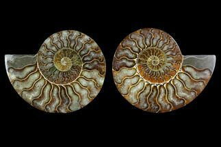 "Buy 3.95"" Sliced Ammonite Fossil (Pair) - Agatized - #124993"