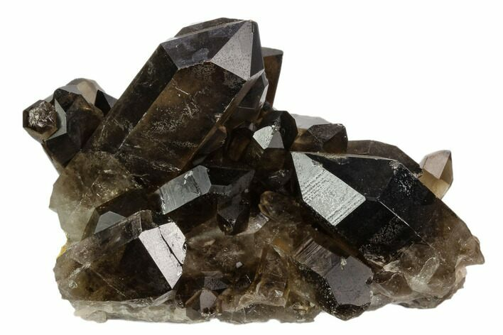 "3.6"" Dark Smoky Quartz Crystal Cluster - Brazil"
