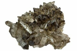Quartz var. Smoky - Fossils For Sale - #124605