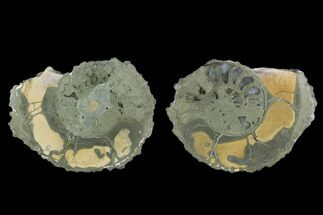 "2.1"" Cut Pyritized Ammonite (Pleuroceras) Fossil Pair - Germany For Sale, #125375"