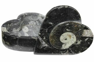 "Buy 4.2"" Fossiliferous Limestone Box With Goniatites & Orthoceras - #123550"
