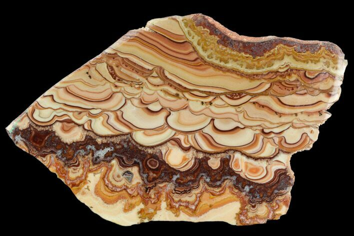 "6.6"" Polished Slab Of Rolling Hills Dolomite - Mexico"