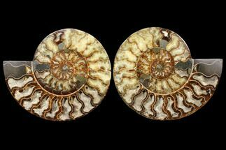 "10.75"" Agatized Ammonite Fossil (Pair) - Huge Example For Sale, #127250"